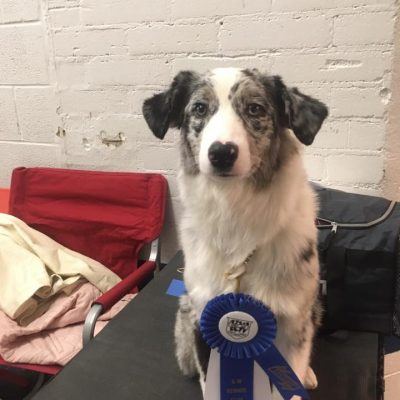 First Obedience Title at only 6 months old!!!