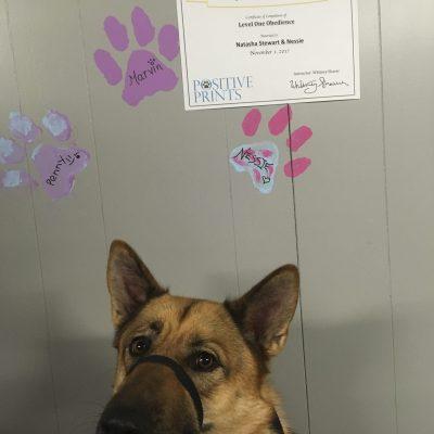Nessie receiving her level 1 certificate! Great job!