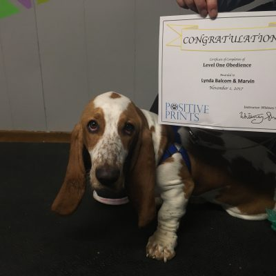 """Excellent instruction while building a positive relationship with your dog.""  Marvin receiving his level 1 certificate! Great job!"