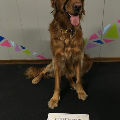 """Thank you Whitney for great training! Penny loves to learn; looking forward to Obedience Level II"""