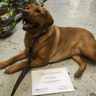 """Highly recommended going with Whitney for training. My husband and I had taken our dog to big brand pet store for training when we first got her and we were not overly happy with the outcome. We choose to go with Whitney this time and she was so knowledgeable and helpful with the training. We definitely saw an improvement after every class and we are very happy with the end result. Will definitely be doing the stage 2 training as well."""